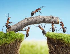 Ameisen bilden ein erfolgreiches Team