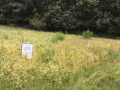 300m² landwirtschaftliches Grundstück in Nordholz - Aussaat April 2018