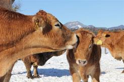 """Regionale Produktion von Fleisch mit """"Mehrwert"""""""