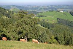 Österreich braucht Mutterkühe