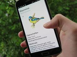 NABU Vogelbestimmungs-App