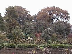 初冬の屋敷森