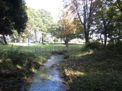 さいかち窪から流れ出た黒目川の源流