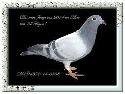 DV 01372-14-0388 Blau