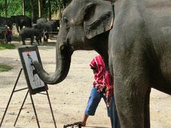 テレビで見たことがある天才象さんが、作品を画いてます!象さんが、「象」をモデルにしてるね。