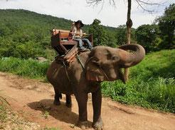 ゾウさんに乗って移動中!ゾウ運転手のおじちゃんが、撮影してくれました!このまま、運転手不在で暴走しないのか?