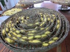 タイはシルクで有名ですが。タイの蚕(カイコ)の繭は、ナント、黄金色なのです ビックリ!!(゚ロ゚屮)屮
