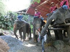 ゾウさんが、遊んで欲しいとジャレてるのですが。どうみても、ウッチー、襲われてます(゜o゜)ゾウさんと遊んだ後は、象毛がザラザラ体に残りまーす!