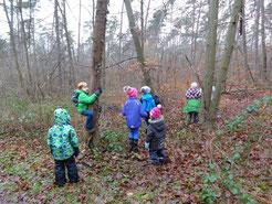 Wir suchen nach allem, was nicht in den Wald gehört.