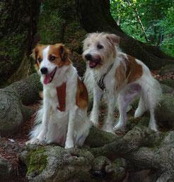 Dipsy und Chiva auf dem Baumwurzelpfad in Bad Harzburg