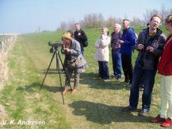 Vogelbeobachtung am Bottsand - Foto: V.Andresen