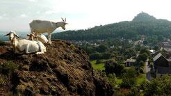 Rauher Kulm eine Vulkanlandschaft im Naturpark Nördlicher Oberpfälzer Wald
