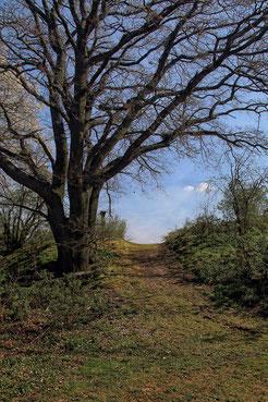 Hügeliger Wanderweg zwischen Bäumen