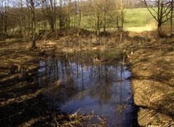 Laichgewässer in der Obhut der NABU-Gruppe