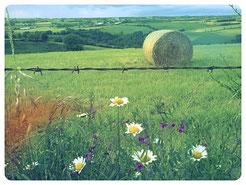 Aveyron Chambres et table d'hôtes, séjour Albi, Rodez , Millau , Roquefort , Gîte à la ferme , vacances Aveyron, Réquista ,Hébergement insolite , hôtel pas cher Aveyron sud ,France Gîte