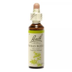 Wild Rose n°37 - BACH