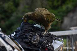 Neuseeland - Motorrad - Reise - Kea - Arthurs Pass