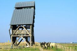 Viehauftrieb am Turm