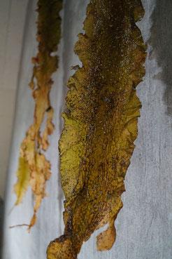 drei an der Wand hängenden großen Seegrasblätter sind ein Teil der Installation layer by layer