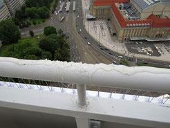 In der Klebepaste sieht man den Krallenabdruck des Turmfalken. Er verklebte sich das Gefieder und starb. Foto: NABU Leipzig