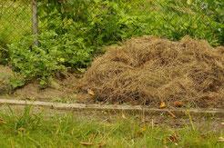 Komposterde wurde gesiebt und mit Gras ab- gedeckt.