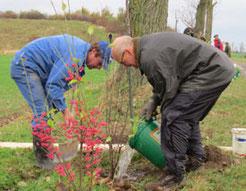 Die neuen Bäume und Sträucher müssen intensiv gewässert werden, damit sie gut anwachsen.