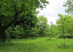 """Grüner Bewuchs in den ersten 2 bis 3  Metern über dem Boden, wilde Wiesen und wilde Hecken - so kann ein Stück """"Wildnis"""" in der Stadt aussehen."""