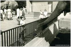 schnapp - hat Elefant das Brötchen
