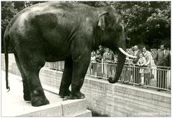 das alte Elefantengehege