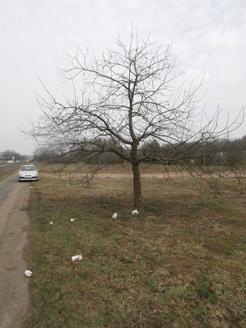 Vor dem Baumschnitt
