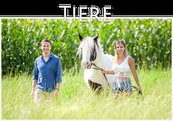 Pferdefotografie Weiz, Mensch und Tier, Mein Hund, Pferdebilder