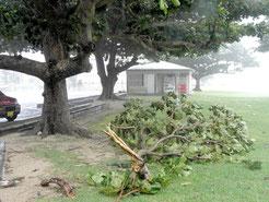 強風で折れた木の枝が散乱している舟蔵公園(12日午後)