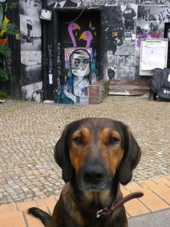 berlin mit hund, Melanie Knies, Hundeabenteuer, Hundekrimi, Hundewanderung, Hundeschule