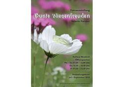 """Valerie Forster, Ausstellung: """"Bunte Wiesenfreuden"""""""