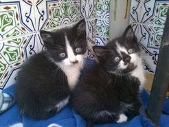 Gatitos adoptados!