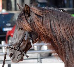 Uruguai, Equestria 2012.