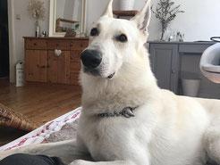 Urlaub Hund Sauerland