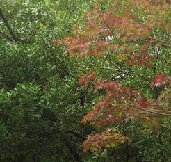 木々の色変わり