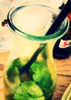 wasp, home-made-lemonade