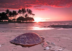 a turtle finds a place to retreat and relaxes to heal and harmonize