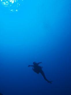 ヨロン 体験ダイビング あおいろクジラ