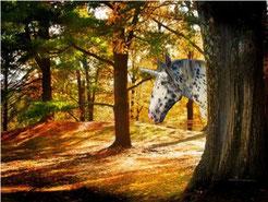 Annika im Wald :-)