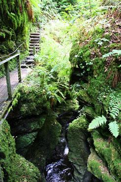 Dicht bewachsener und schmaler Canyon der Lydford Gorge