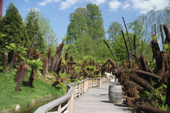 Site des fougères arborescentes photo extraite du site