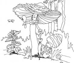 """Bild aus dem Buch                    """"Das Konzert im Wald"""" von Evelyn Filep"""