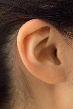 耳ツボダイエット 耳の5つのツボに金粒と言う小さなつぶをつけていきます。