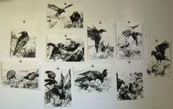 Krähenskizzen Wandbild, Reißkohle, jeweils A3, 2011