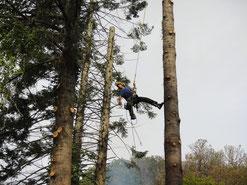 Un peu d'acrobaties pour contrôler la chute de l'arbre