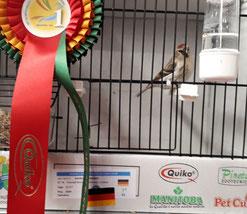 Weltmeister - Andreas Abramsen mit Einzelvogel Polarbirkenzeisig