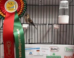 Weltmeister - Andreas Abramsen mit Kollektion Polarbirkenzeisig